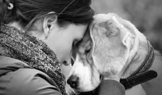 Ξέρετε γιατί ένας σκύλος δεν φεύγει ποτέ από το πλευρό του ιδιοκτήτη του ακόμη και μετά το θάνατο του;