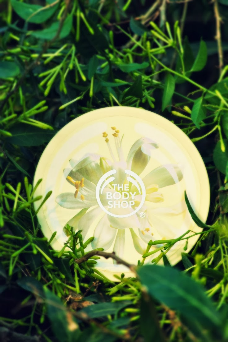 The Body Shop Moringa Body Butter Review