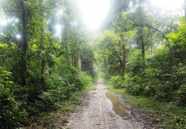 অত্যন্ত মনোমুগ্ধকর মধুপুর জাতীয় উদ্যান: টাঙ্গাইল