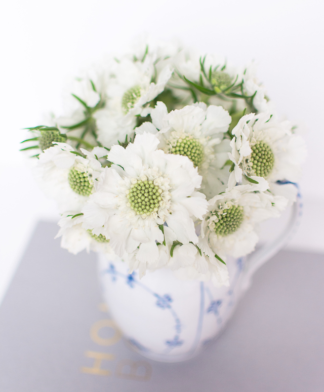 Beautiful Scabiosa