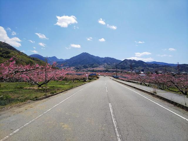 白井甲州線 桃畑