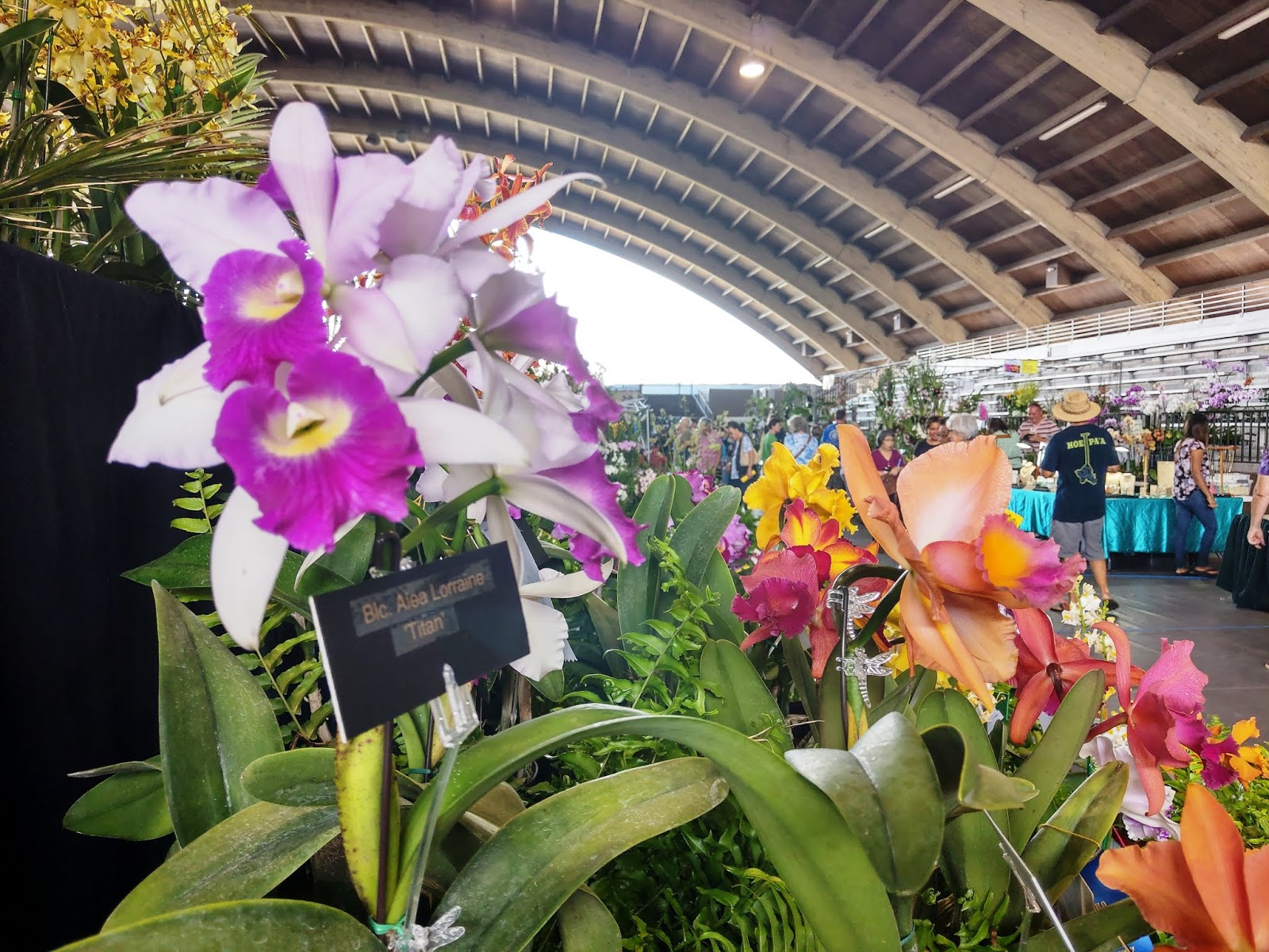 All hawaii news a good year for flowers honolulu police sport body a good year for flowers honolulu police sport body cams big island lava recovery now has 670m price tag politics continue after primary election izmirmasajfo