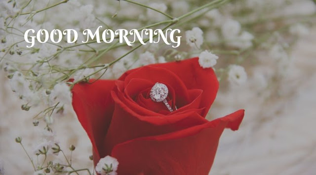 good morning rose images and quotes