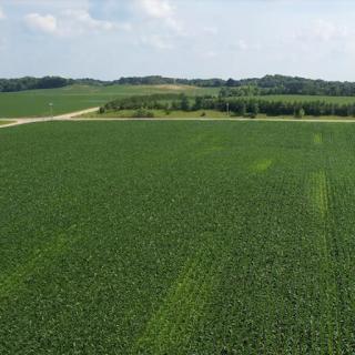 corn on-farm research nitrogen minnesota