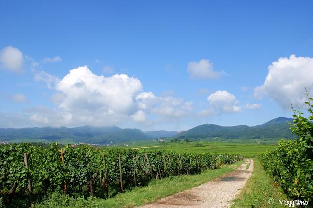 La Route des Vins passa anche per Ribeauvillé