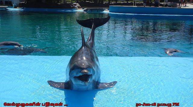 Las Vegas Dolphin Show