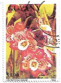 Selo Orquídea Odontoglossum