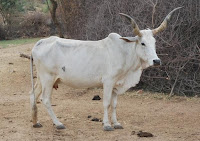 nbagr cattle breeds, agritechknowledge
