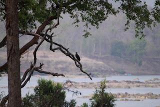 Ken River Panna National Park