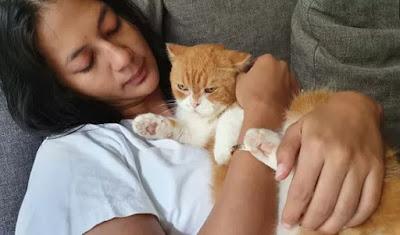karakteristik kucing anak kucing kucing anggora gambar kucing kucing persia suara kucing ciri-ciri kucing habitat kucing makanan kucing jenis kucing famili kucing video kucing lucu di dunia