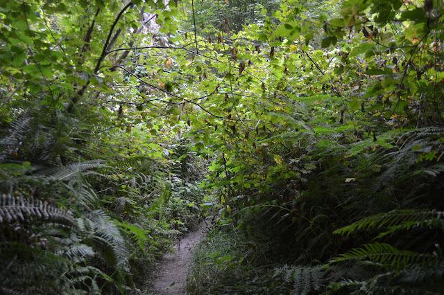 narrow trail with encroaching vegetation