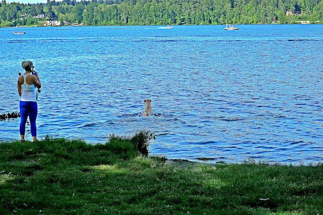 Lake Sammamish Bellevue, WA
