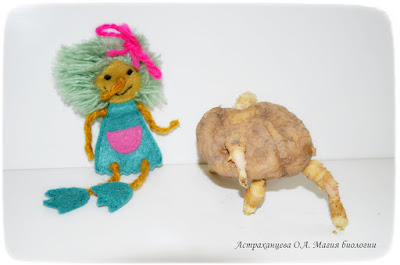 tvorcheskie-igry-s-kartoshkoj-magiya-biologii