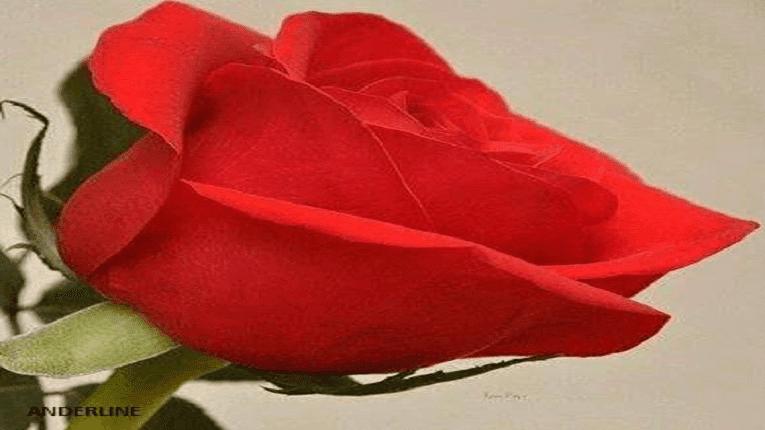 Puisi (cinta romantis) Berbalas Kata