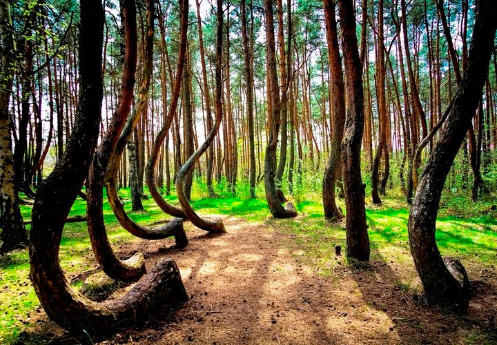 Hoia Baciu Haunted Forest