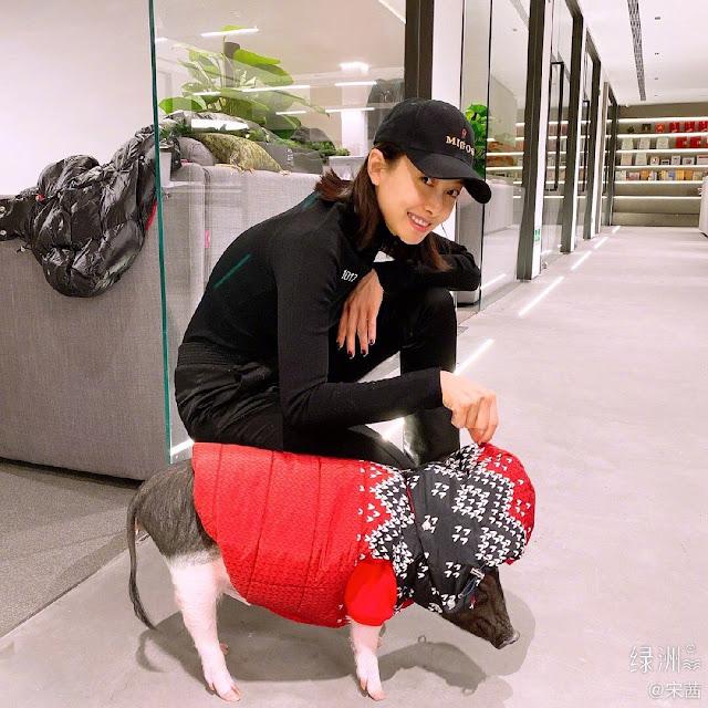 victoria song pet pig