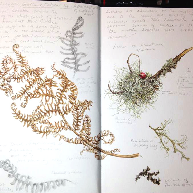 Sketchbook study of lichens
