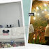 Man turns girlfriend's living room into a garden for wedding proposal