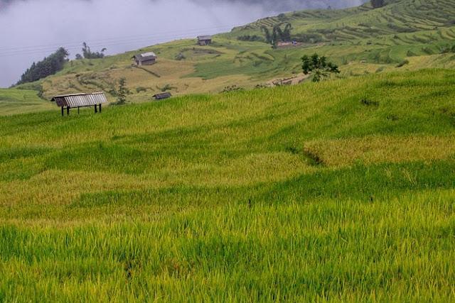 Ngắm cảnh sắc 'thiên đường' ruộng bậc thang hùng vĩ ở Y Tý Lào Cai 6