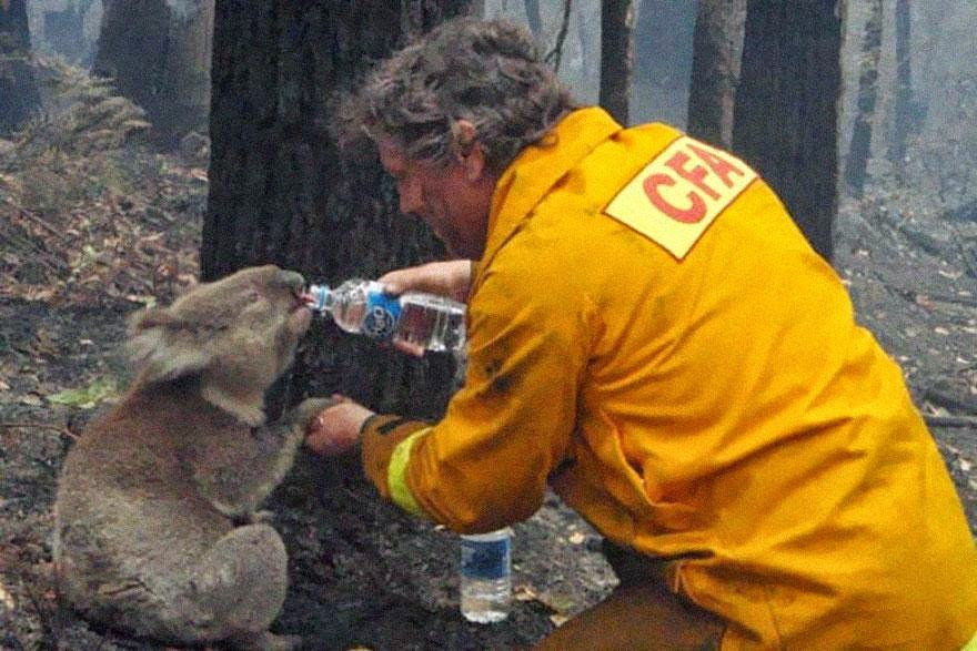 30 of the most powerful images ever - A firefighter gives water to a koala during the devastating Black Saturday bushfires in Victoria, Australia, in 2009