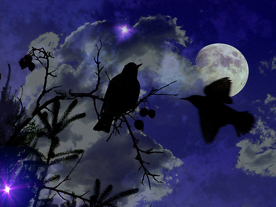 http://1.bp.blogspot.com/-HeqXCpw5sQ8/TjW9m9wYMVI/AAAAAAAAAw8/9Y4kIperGKo/s1600/work.1294621.2.flat%252C550x550%252C075%252Cf.night-birds.jpg