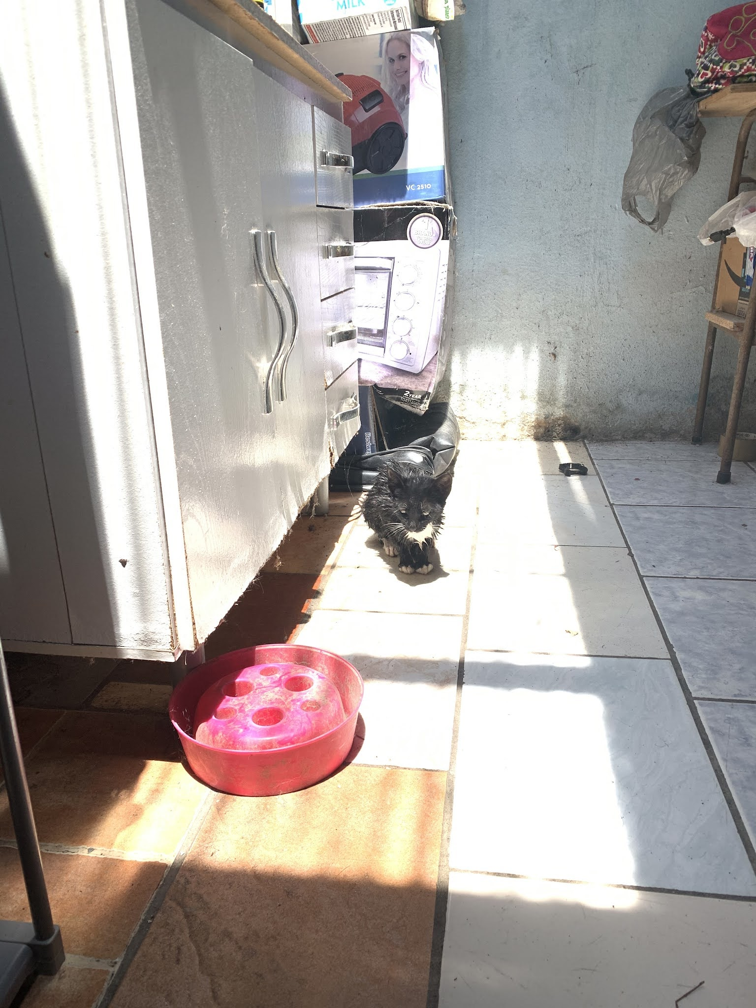 Como bañar a un gato negro