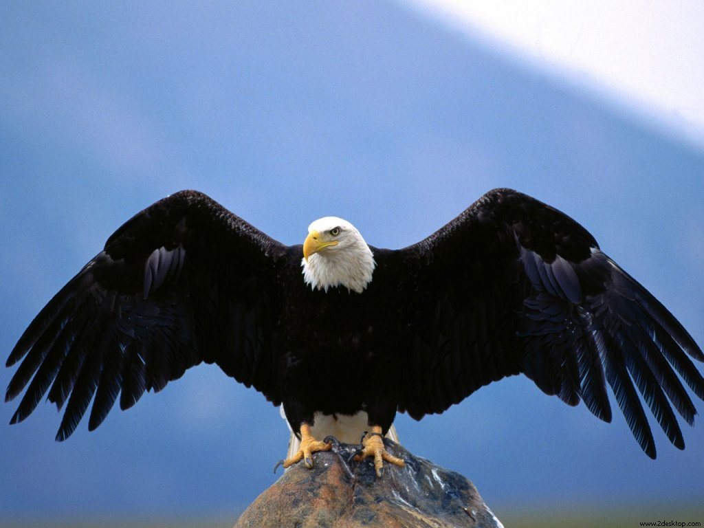 Eagle Bird Collection Of Wild Life Animals Wallpapers For: Amazing Wild Life Photography