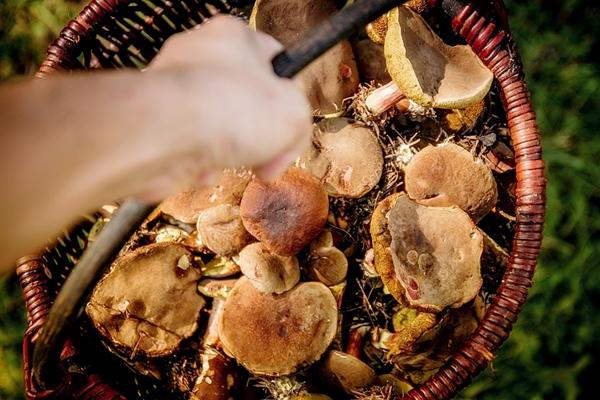 Ugotuj sobie pyszną zupę grzybową, część zasusz – uzyskasz wspaniały dodatek do sosów, zup, wigilijnego bigosu. Te najładniejsze warto zamarynować, natomiast resztę ugotuj i zamroź. Po rozmrożeniu w dowolnym momencie możesz wyczarować wspaniałe dania, np. smażone grzyby w sosie śmietanowym z ziemniakami, roladki z kurczaka nadziewane kurkami lub grzyby na zimno