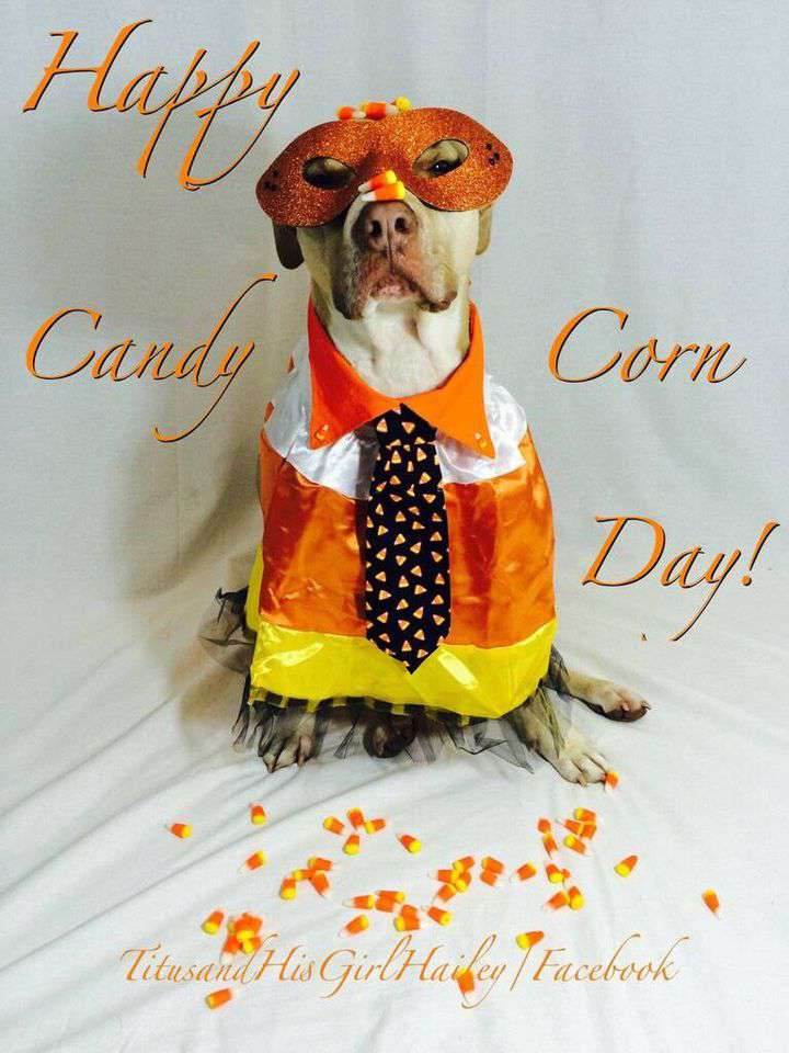 National Candy Corn Day Wishes