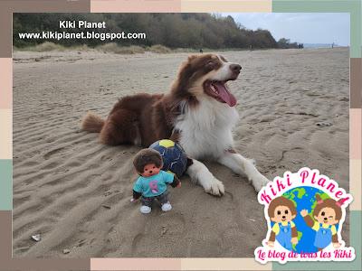 kiki Monchhichi berger australien chien