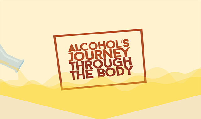 Alcohol's Journey through the body