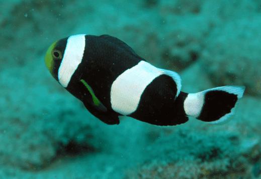 45+ Gambar hewan ikan nemo terupdate