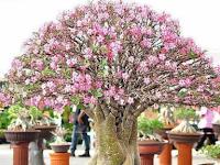Macam-Macam Pohon Hias yang Tidak Butuh Banyak Disiram