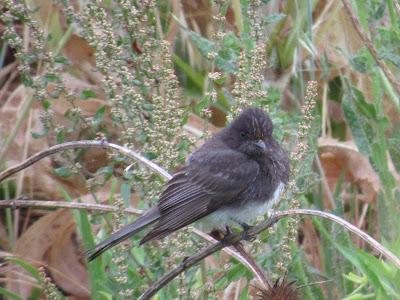 Sacramento National Wildlife Refuge California birdwatching destination