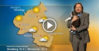 Cat Interrupts German Weather Broadcast To Demand Cuddles!