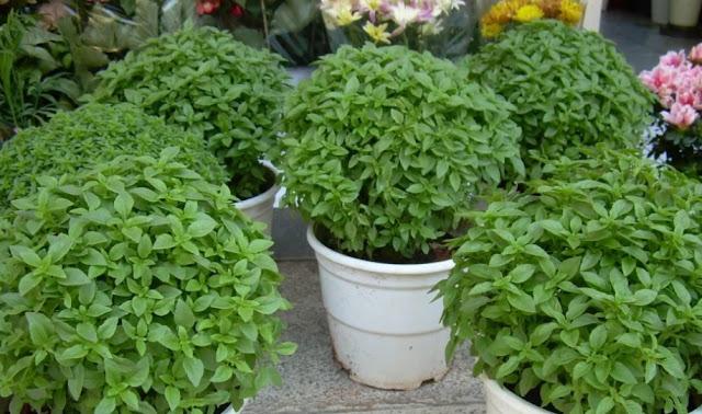 φυτά που επηρεάζουν θετικά την ψυχολογία σας στο σπίτι