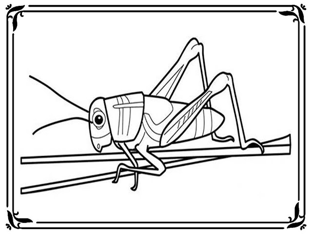 grasshopper coloring pages to print