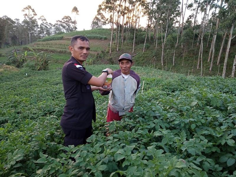 Kanreapia Kampung Produktif Hasilkan Sayur Mayur Berpuluh - Puluh Ton