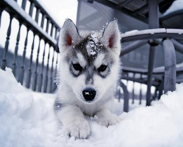 Tips for Keeping Your Dog Healthy and Safe During Winter
