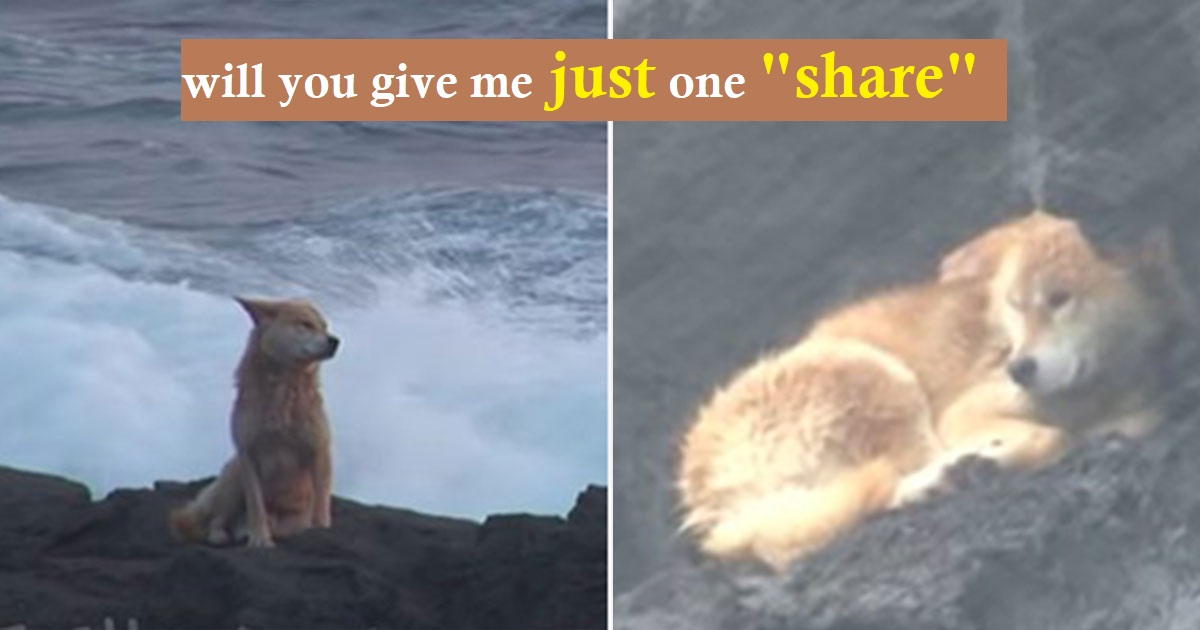 Puppy Spent A Year Sitting On Rocks By The Sea Waiting For His Owners To Return