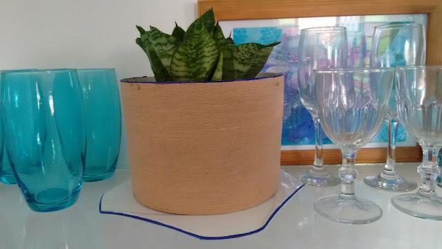 espadinha (Sansevieria trifasciata)