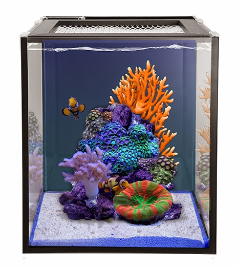 New 10 and 20 gallon nuvo fusion nano tanks from for Saltwater fish for 10 gallon tank