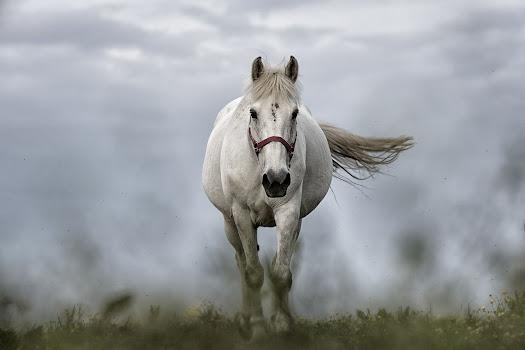 أجمل صور خلفيات خيول 12