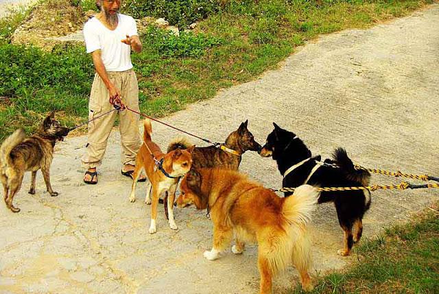 dogs, man,leash