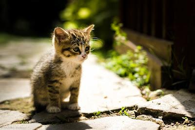 Cute Cats Kitty Pets 16