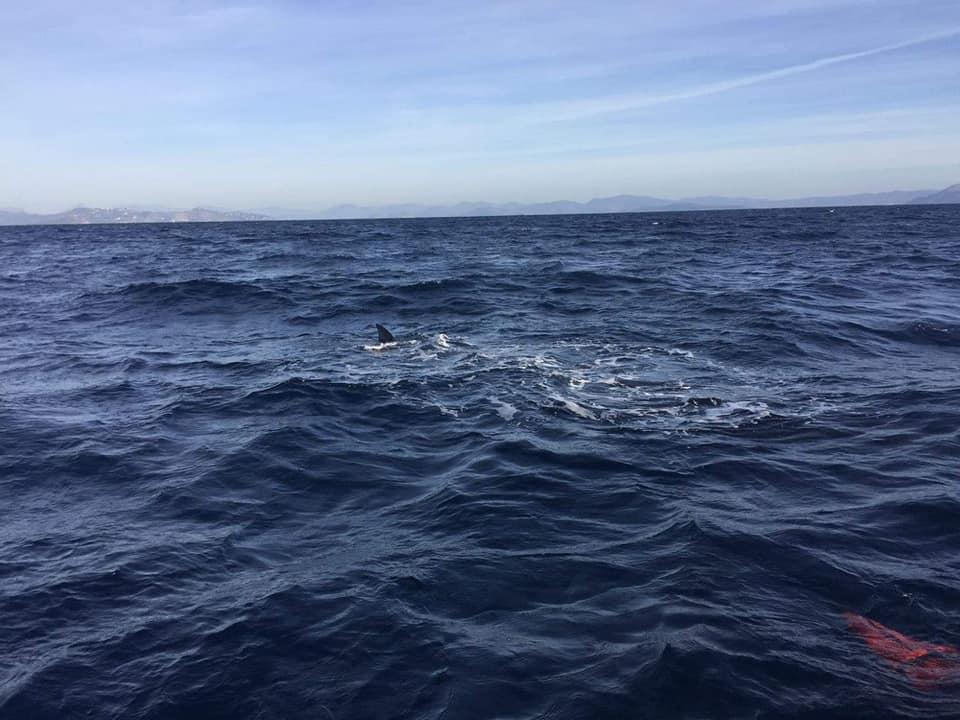 Δείτε παρακάτω τις φωτογραφίες με την φάλαινα στην Εύβοια