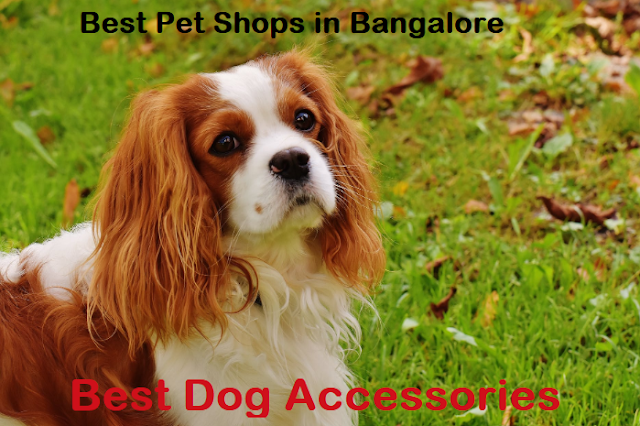 pet shops in banagaore marathahalli, pet shops in koramangala, metro pet shop bangalore, pet shops near me bangalore, bangalore pet shops, dog shops bangalore, bangalore dog sale and purchase