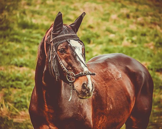 خيول جميلة وخلفيات لصور الخيول