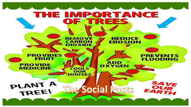 importance of trees in our life