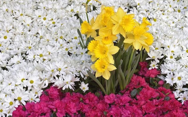 Foto met witte, gele en roze bloemen